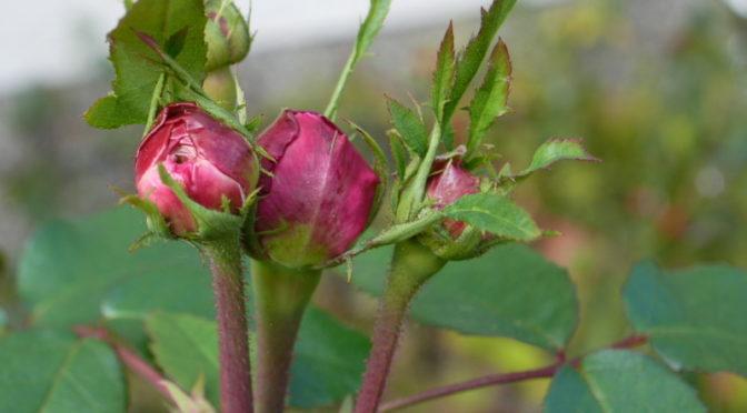 Gartenzäune: wozu und weshalb?