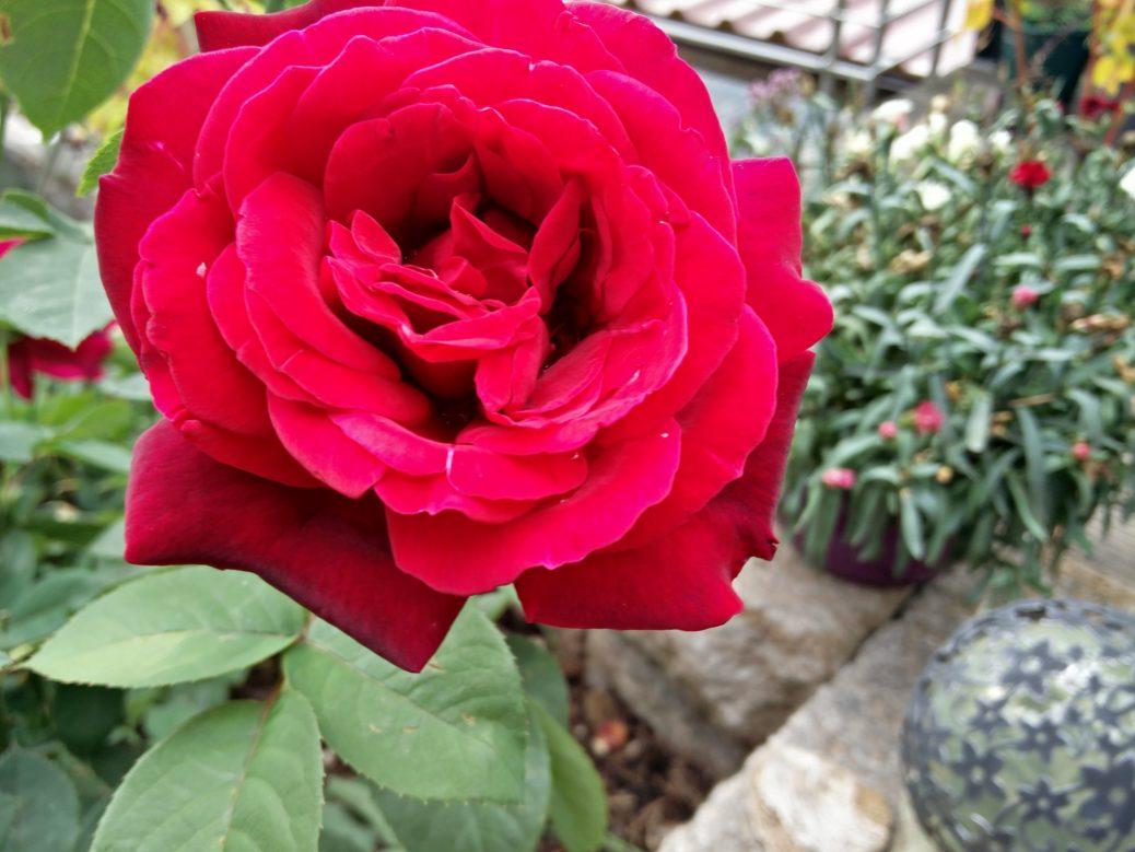 chryslerimperial 1 rosen. Black Bedroom Furniture Sets. Home Design Ideas