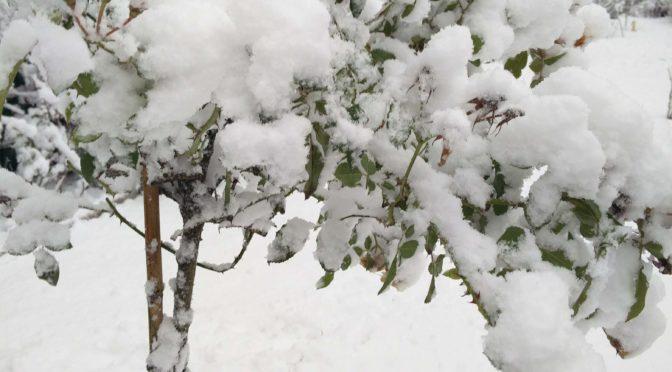 Es schneit und schneit und …